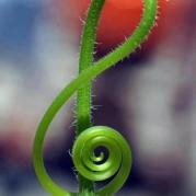 gorgeous treble clef in nature